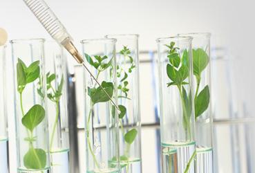 ahnjin bio - no hazardous chemicals